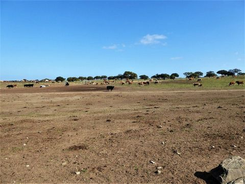 Property 7 000 000 m2, Alentejo. Portugal, Beja, Castro Verde. Property for sale of 700 HA, flat with holm oaks and pasture. The property has abundant pasture, cattle, warehouse of 1 600 m2, excellent house with 5 rooms, smaller game, game reserve, a...